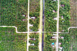 palmoil village